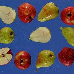 Fruit without stone